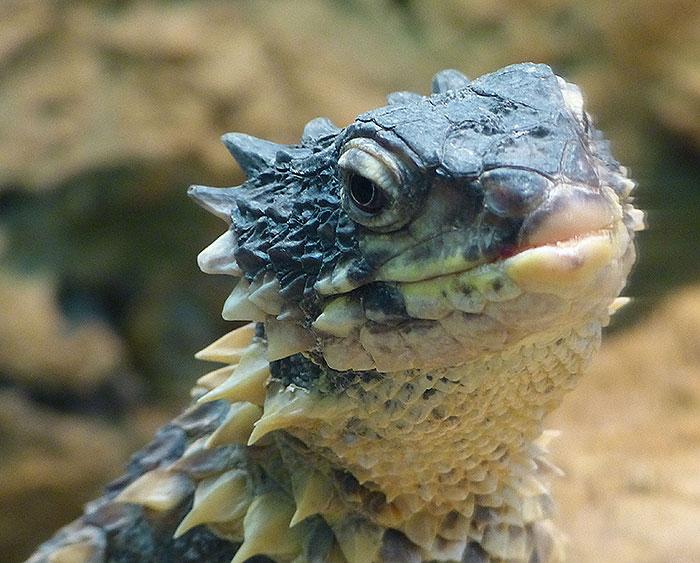 Curious reptile