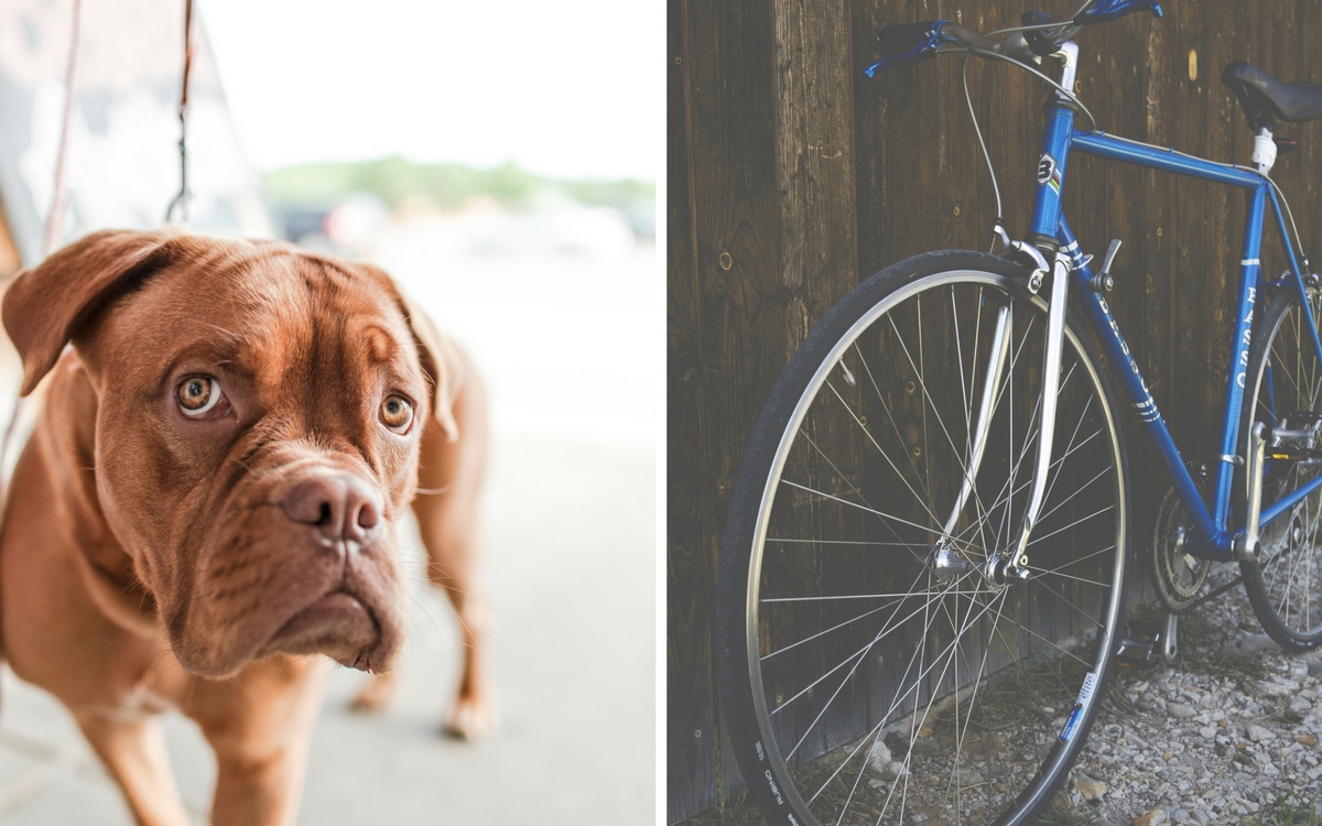 Public transport in Stuttgart: dogs and bikes