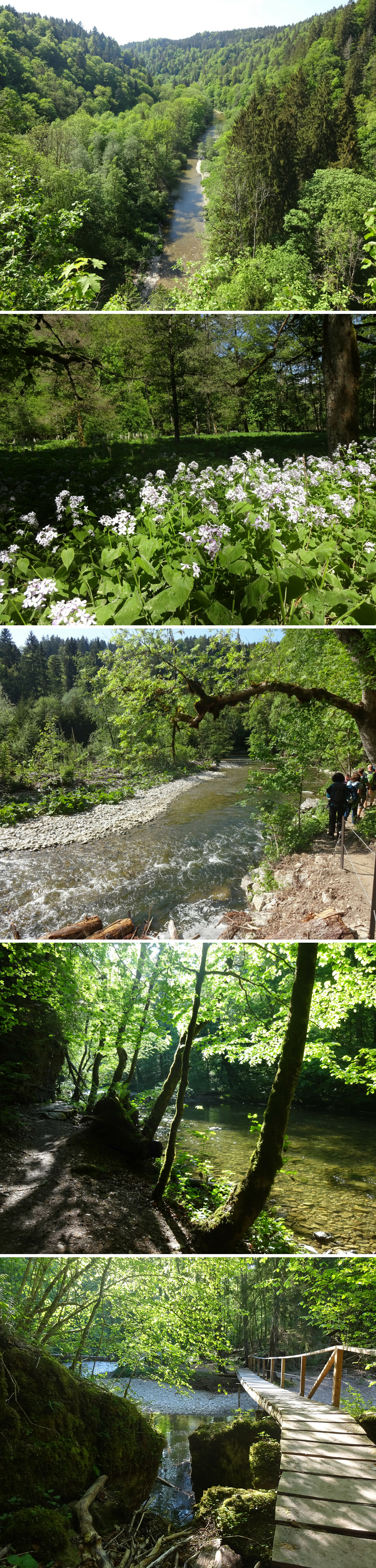 Eldorado for nature lovers: Wutach gorge