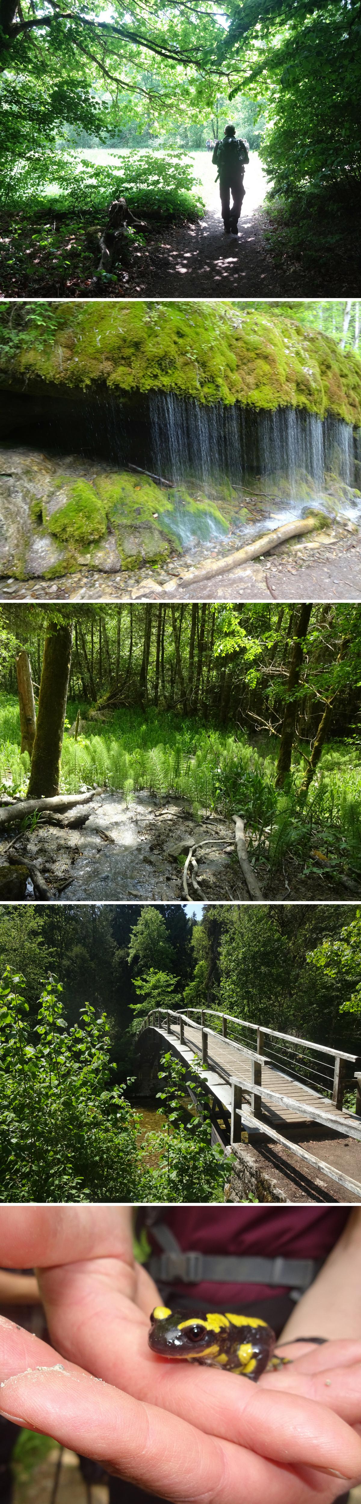 Hiking Wutachschlucht